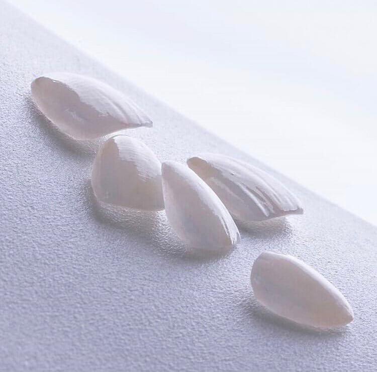 How Do Dental Veneers Work Blog on Morgan Street Dental Centre - Dental Veneers Shells Scattered White
