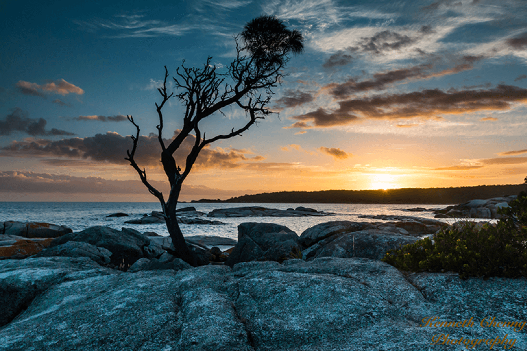 Morgan Street Dental Centre Dr Kenneth Cheung Landscape Portrait Photography Tree on top of Rocks Kenneth8